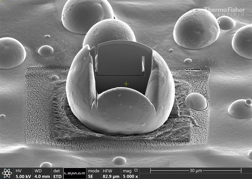 Thermo Fisher Scientific EM Image Contest - MAPP PDRA's winning image.